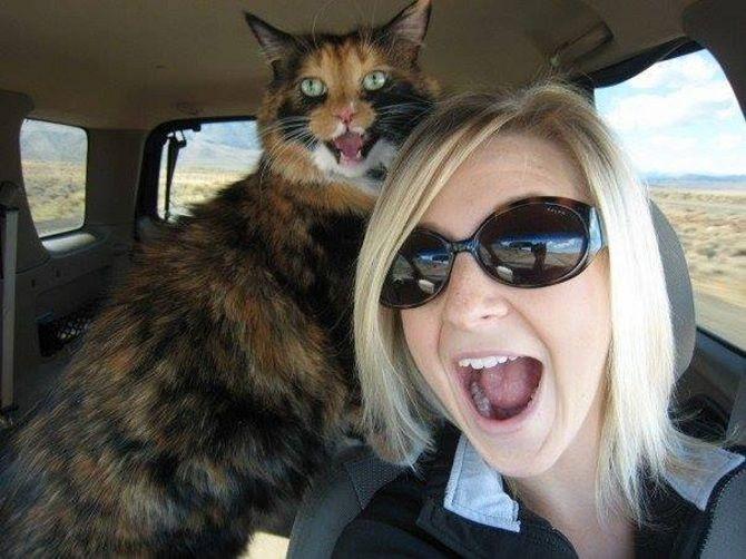кошка в ужасе