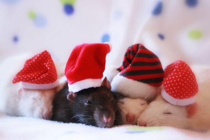 мышки в шапочках