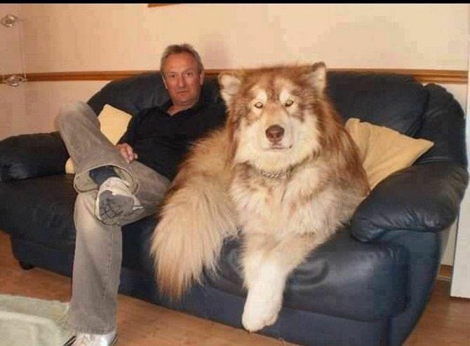 пёс занимает весь диван