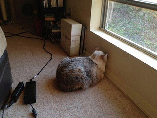 кот в углу