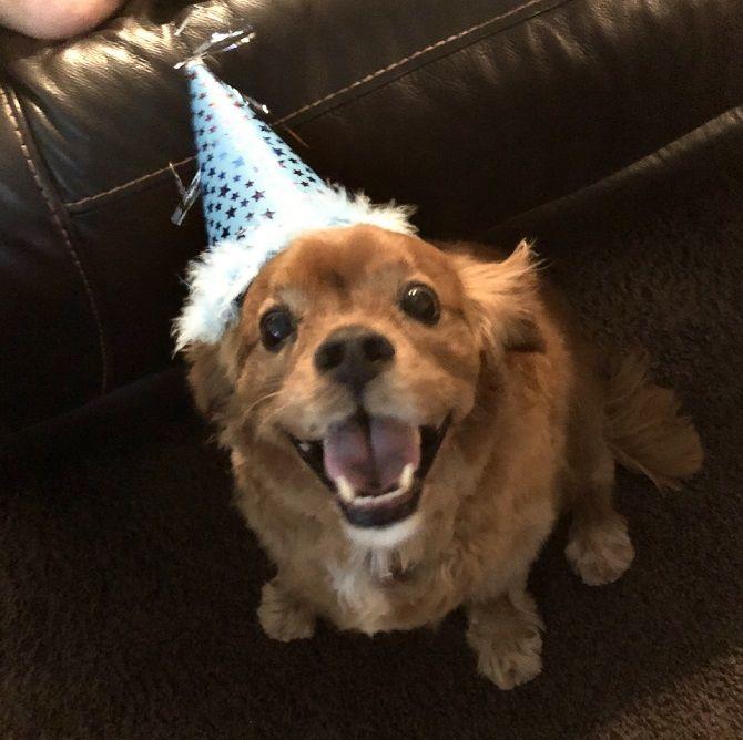 день рождения пса