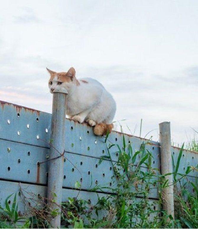 кіт дурачиться