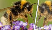 инстаграм пчела би