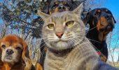 10+ животных, которые научат вас правильно делать селфи