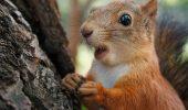 Самые смешные фото животных, которые умеют удивляться