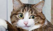 20+ эмоциональных котов, у которых все в порядке с мимикой