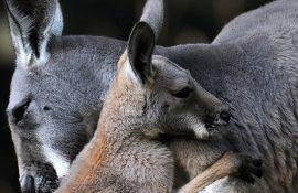 Трогательные фото объятий животных и их детей, в которых невероятно много любви