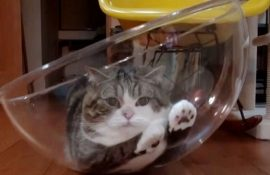 15 доказательств того, что с котами никогда не соскучишься