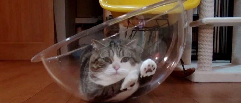 15 доказів того, що з котами ніколи сумувати
