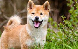 15+ фото жизнерадостных псов, которые заставят вас улыбаться