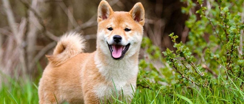 15+ фото життєрадісних псів, які змусять вас посміхатися
