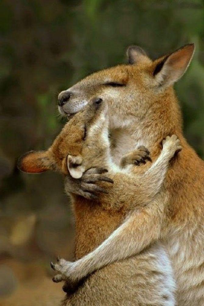 объятия кенгуру