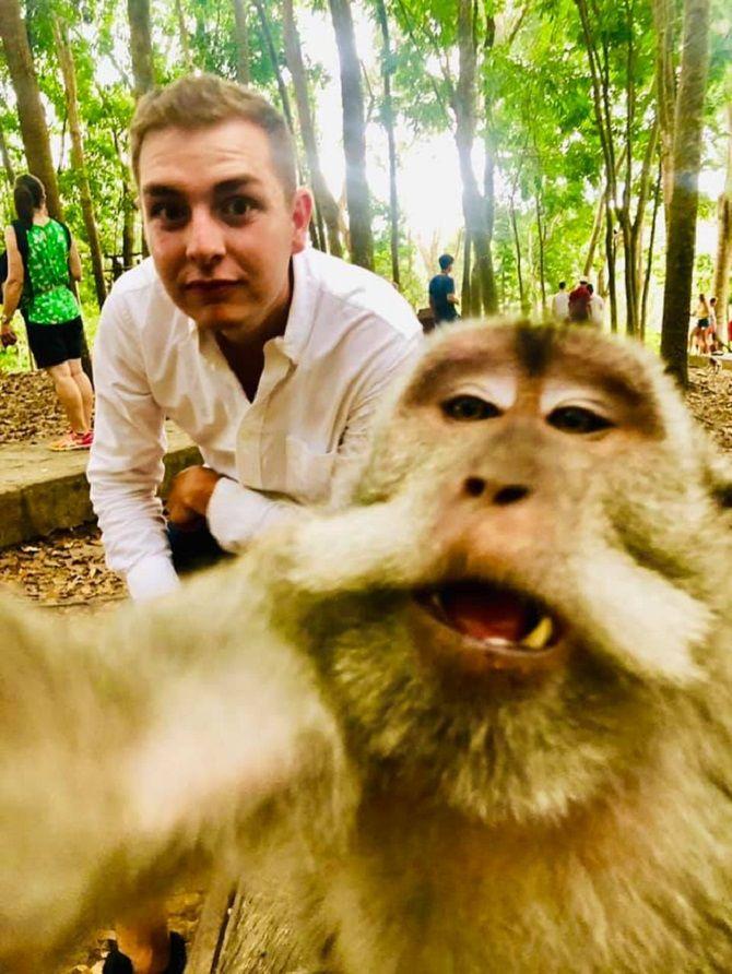 селфи обезьян