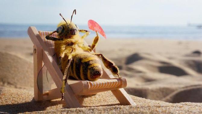 пчела би