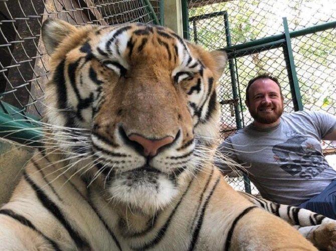 селфи с тигром