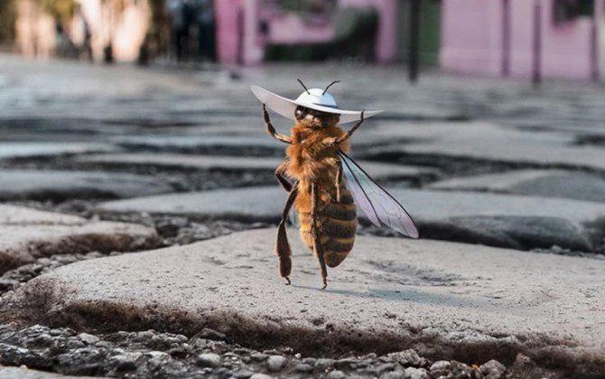 пчела инфлюенсер