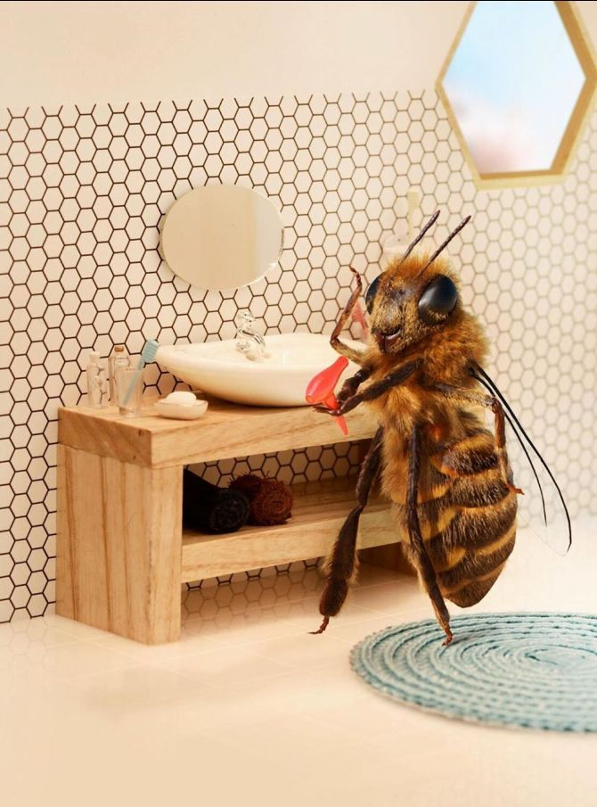 пчела би инстаграм