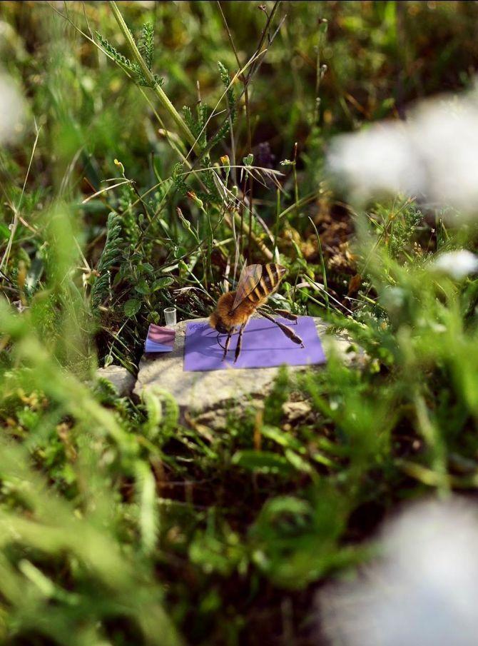 пчелка би занимается йогой