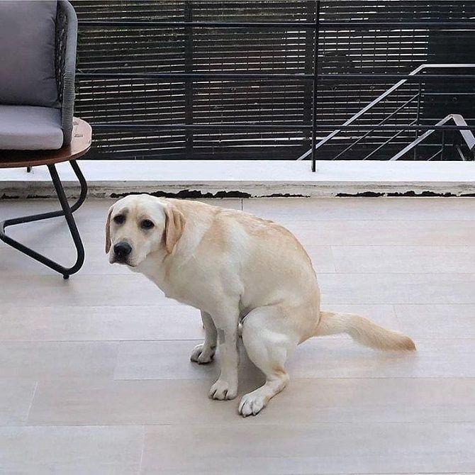 собака шкодник