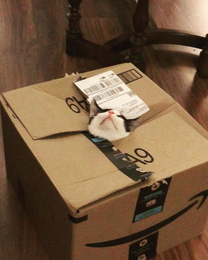 кіт в коробці