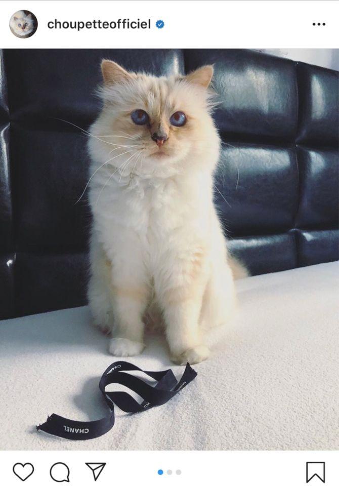 7 найкрасивіших кішок, у яких є свій Інстаграм 6