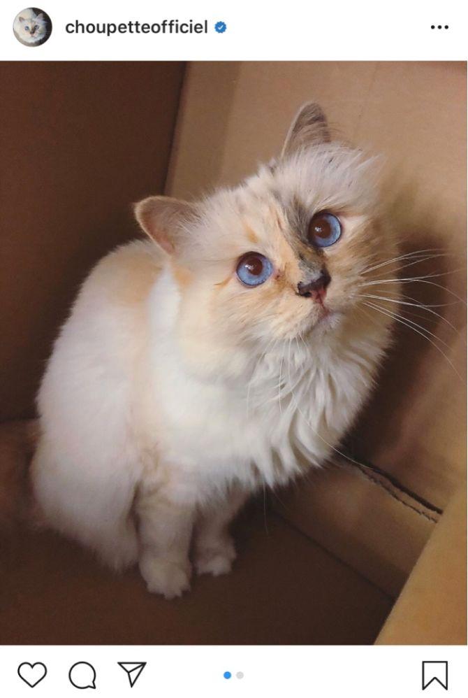 7 найкрасивіших кішок, у яких є свій Інстаграм 7