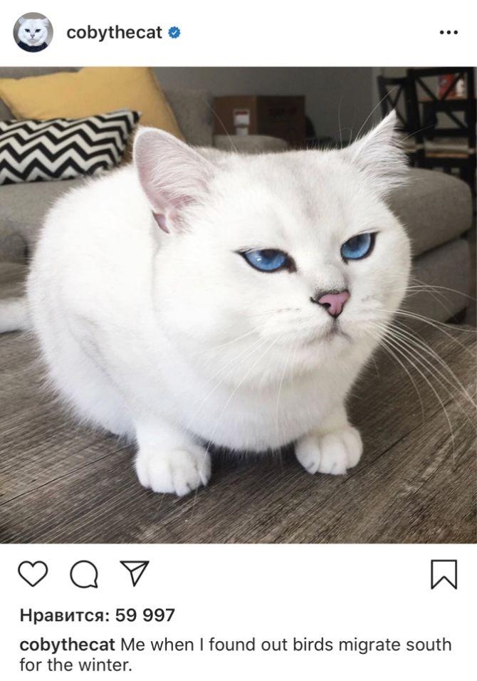 7 найкрасивіших кішок, у яких є свій Інстаграм 1
