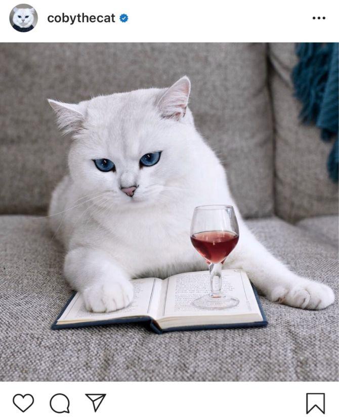 7 найкрасивіших кішок, у яких є свій Інстаграм 2