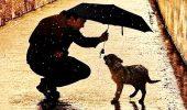 собака под зонтом