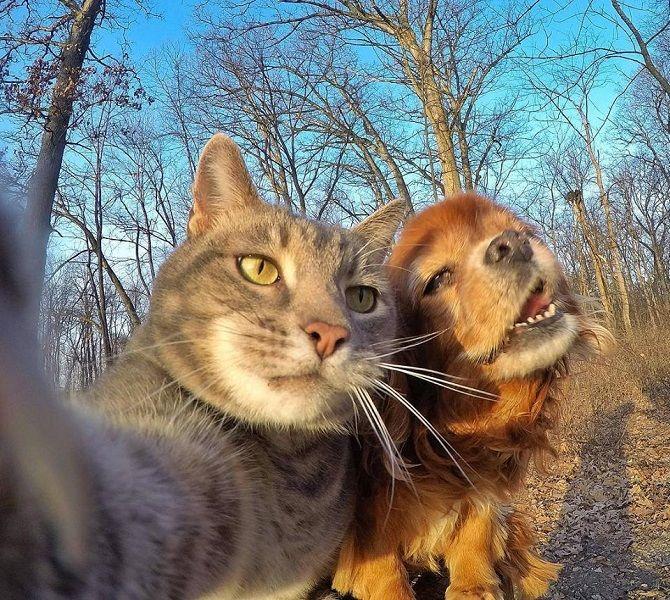 селфи котов