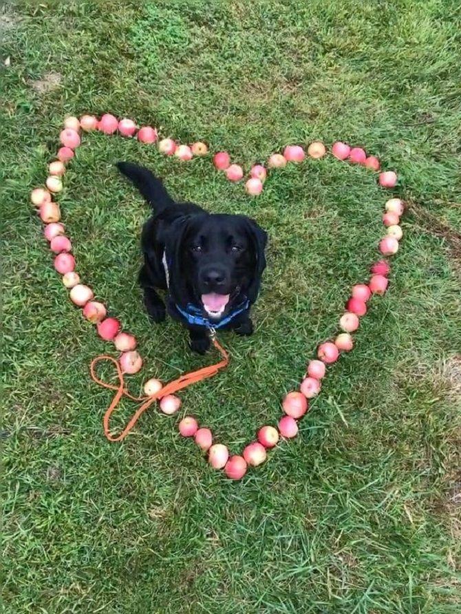пес с яблоками