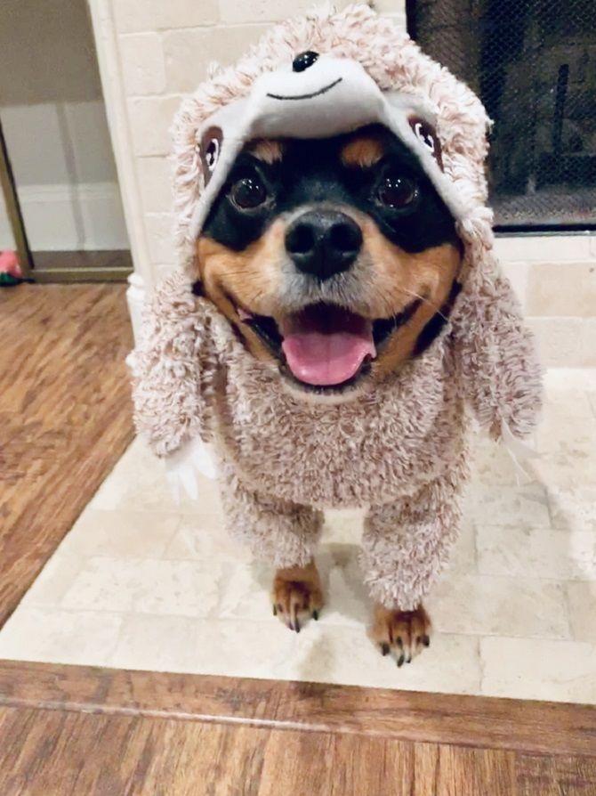 пес улыбается