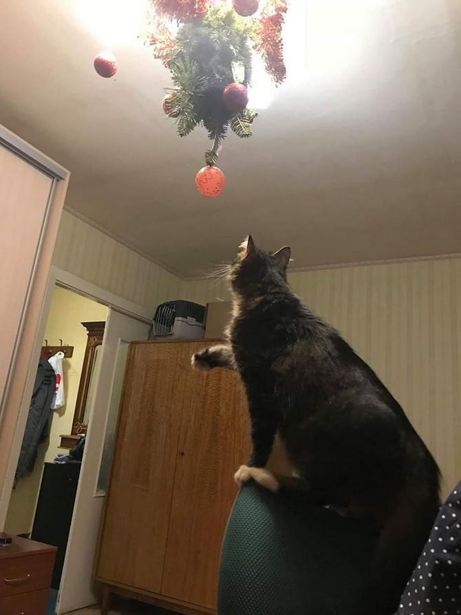 котик тянет лапку к елке