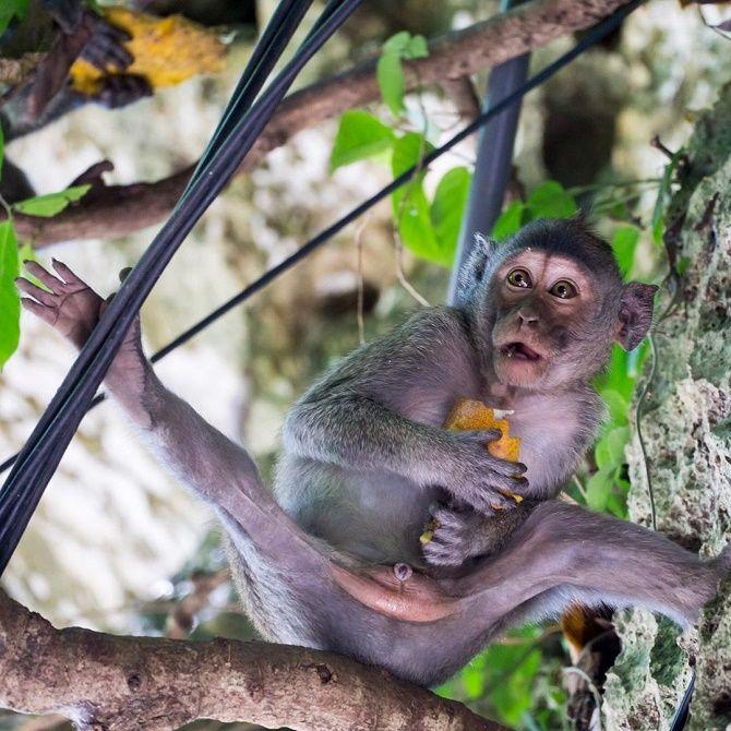 здивована мавпа
