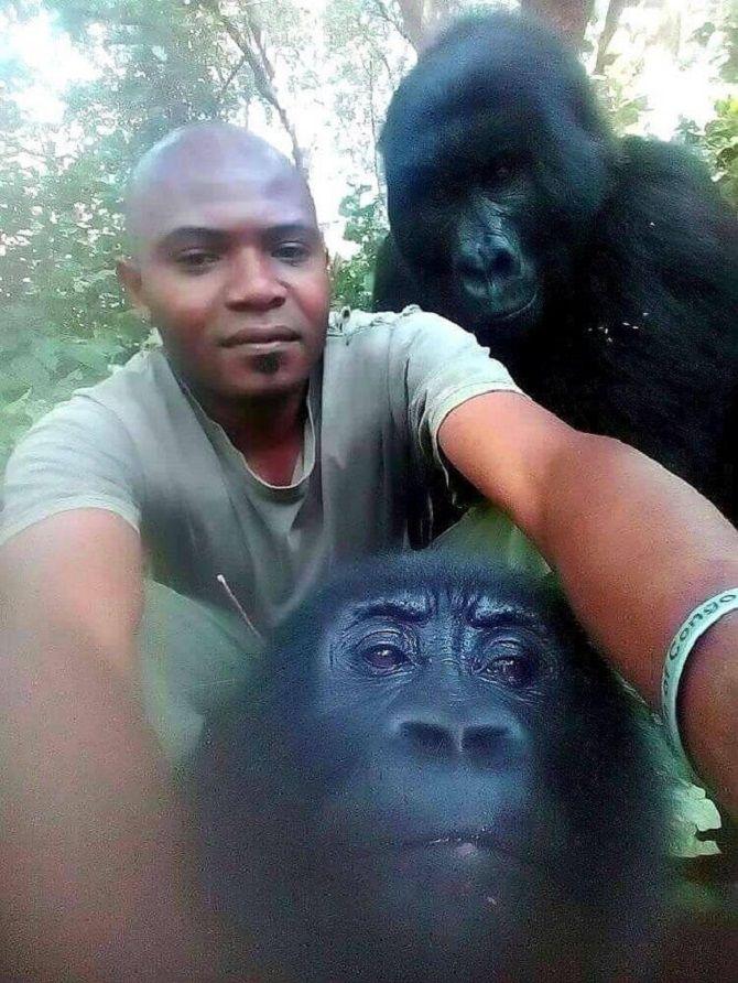 селфи горилл