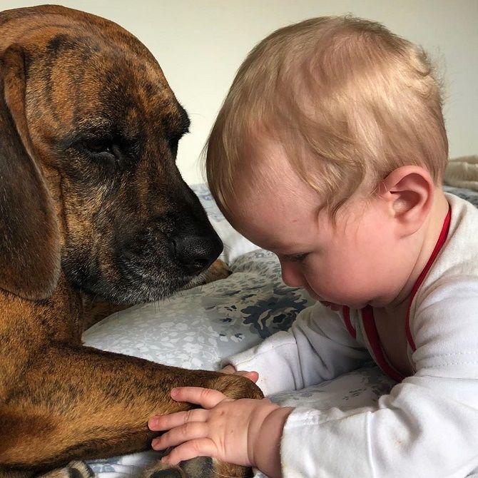малюк та собака
