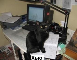 Кіт Саймона: все, що ви хотіли знати 1