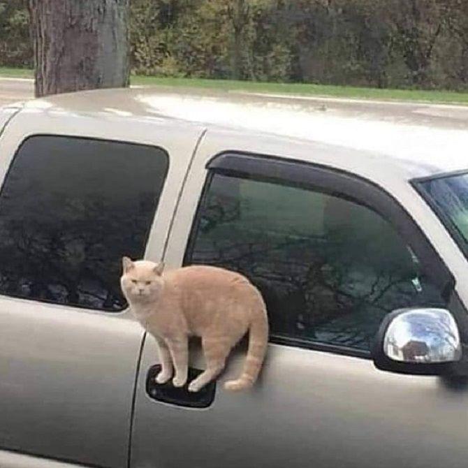 кіт на автівці