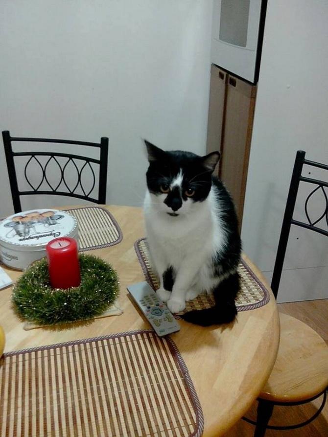 кот возле новогодней свечи