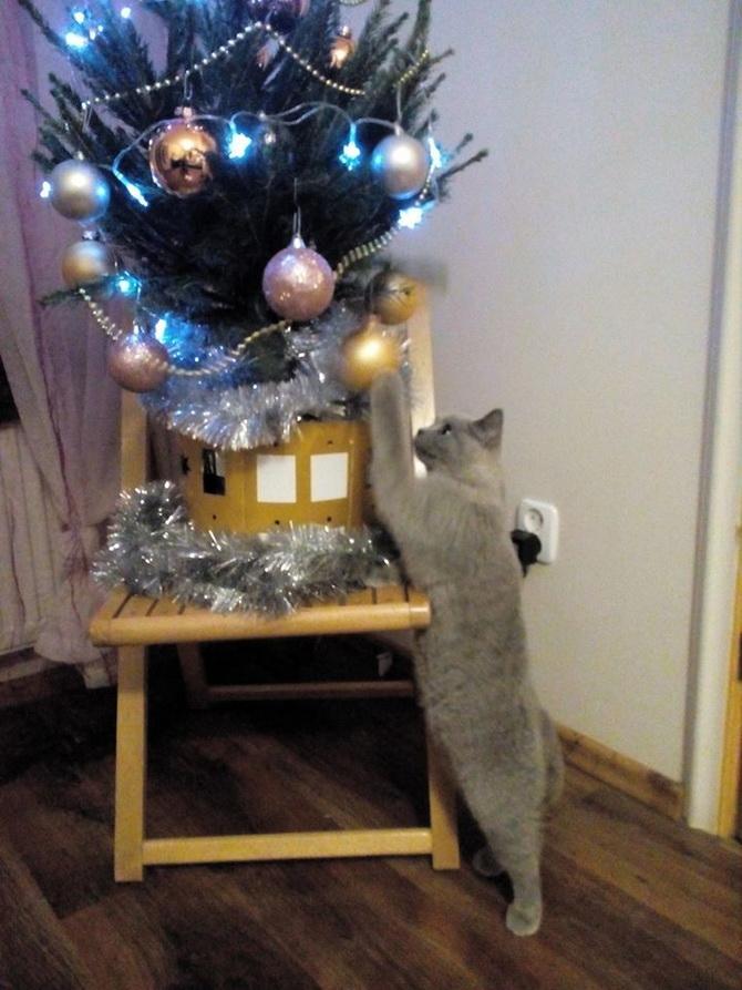 кот тянется к новогодним шарикам