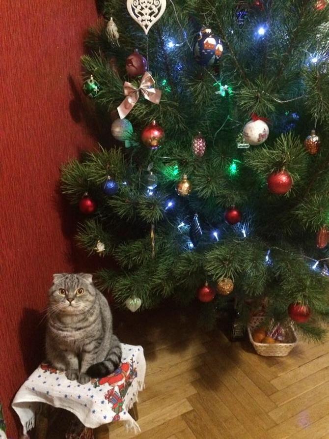 кот возле елки