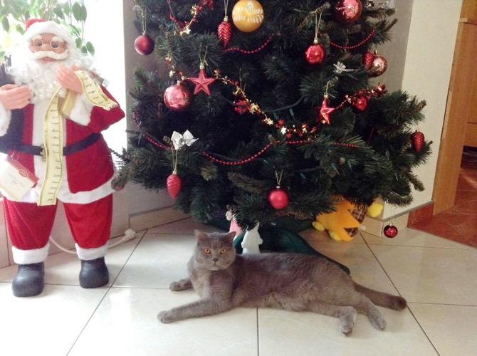 кот в новогоднем интерьере