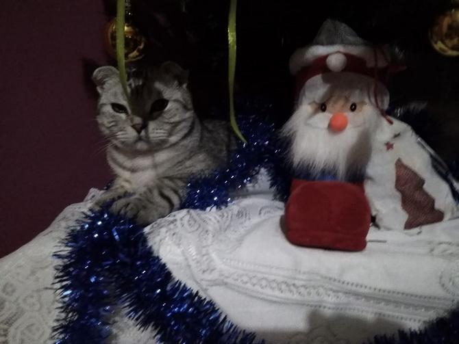 кот и дед мороз