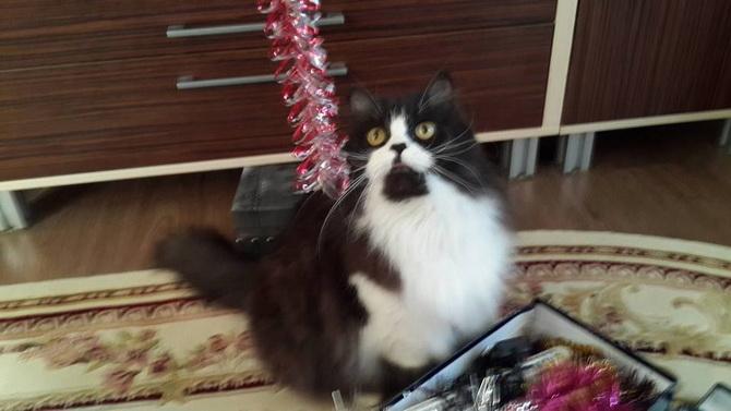 черно белый кот