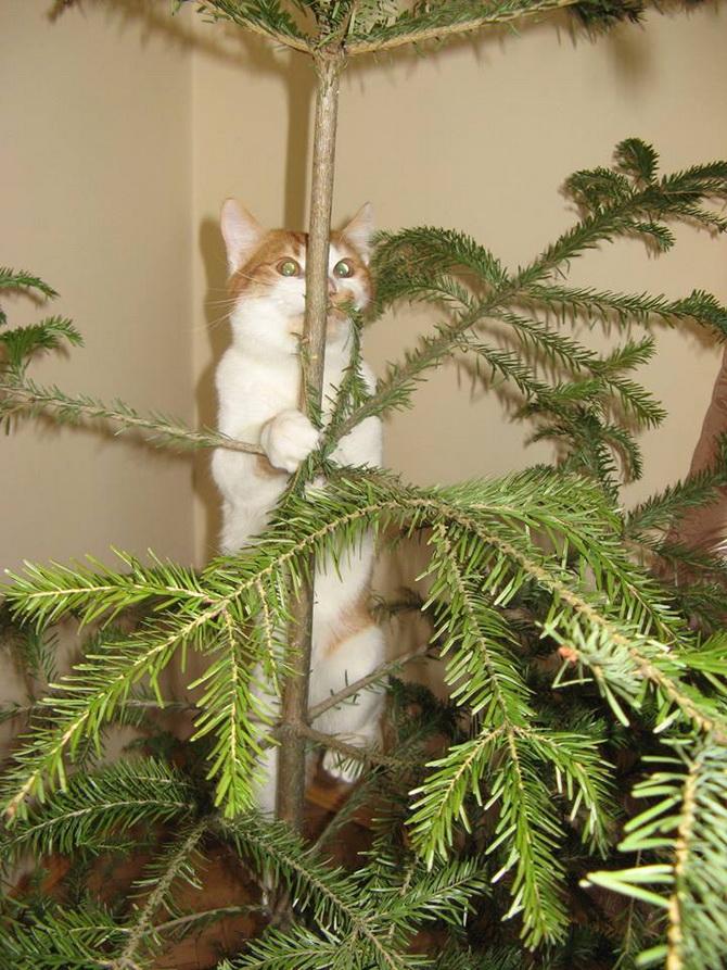 кот возле новогодней елки
