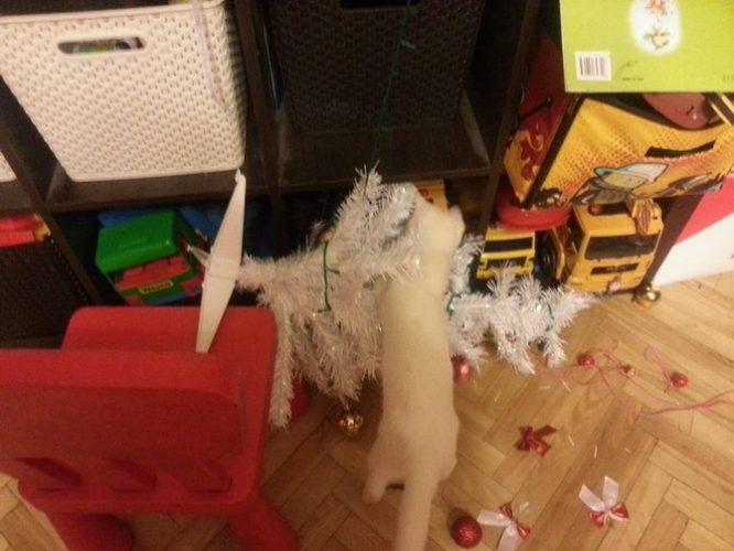кот свалил елку