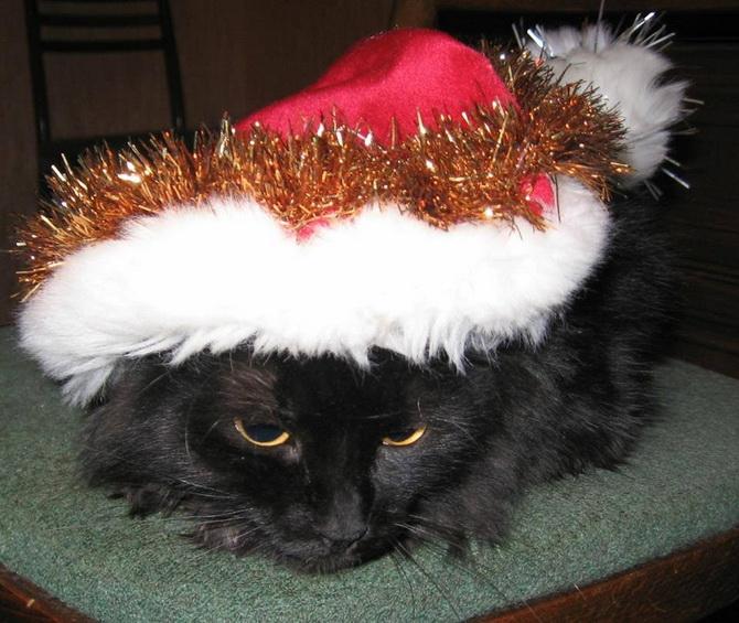 кот в новогоднем колпаке