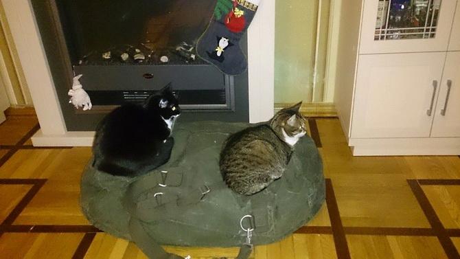 коты лежат возле камина