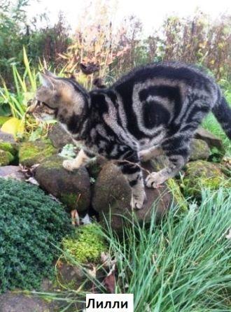 Кіт Саймона: все, що ви хотіли знати 5