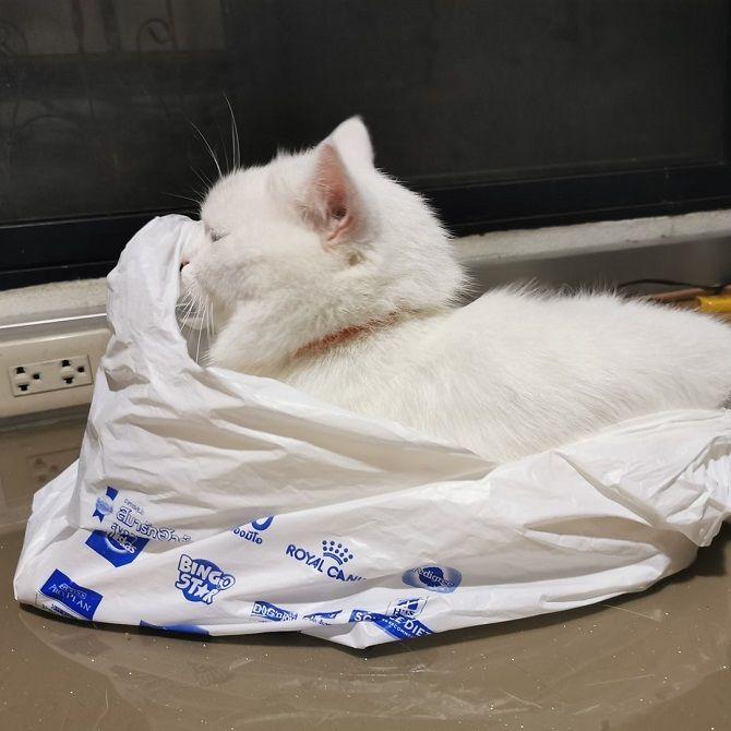 кіт в пакеті